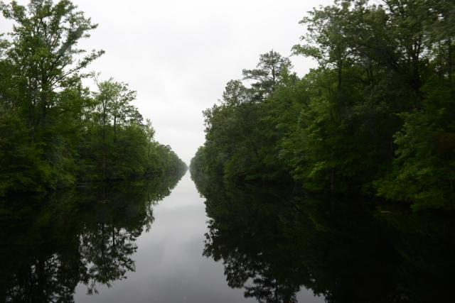 We spent two days traversing through the Dismal Swamp.  This lowland area was first surveyed and tamed by George Washington.