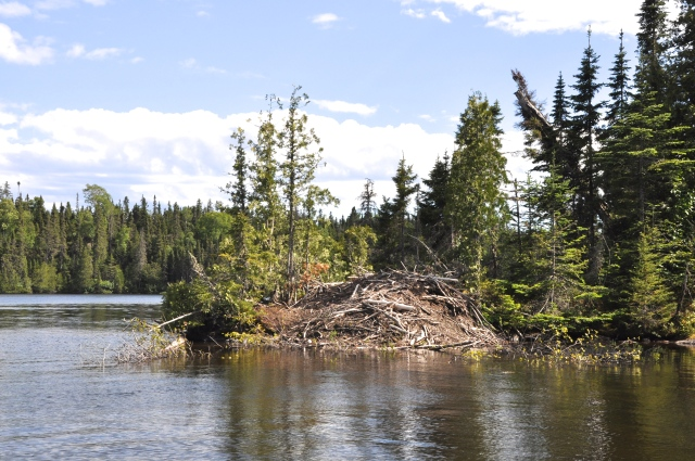 Beaver lodge in Chippewa Harbor